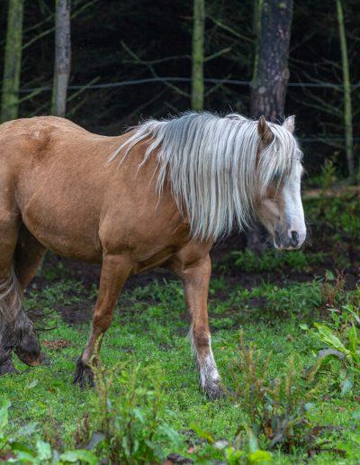 Day4-Equus-week-062web